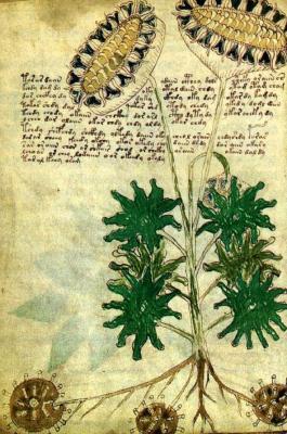El Manuscrito Voynich: Un Manuscrito Indescifrado