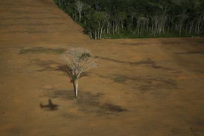 Adiós al pulmón del Amazonas